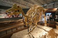 В Японии обнаружили 8-метровый скелет динозавра возрастом 72 миллиона лет