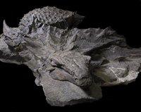 Зачем «танку» среди динозавров мощная броня и камуфляж