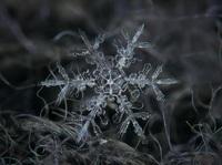 Как снежинка приобретает свою форму
