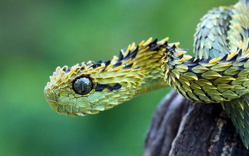 11 экзотических животных, о существовании которых вы не догадывались