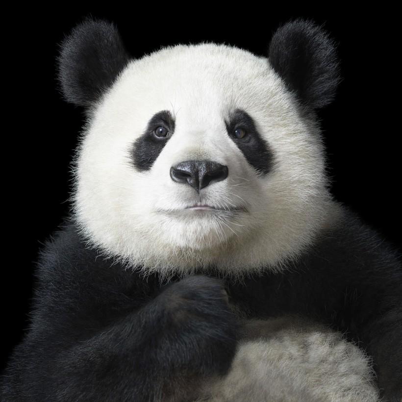 13 шедевральных снимков диких животных от гениального Тима Флэча