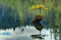 10 удивительных деревьев со всего мира, которые хотят жить вопреки всему