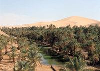Когда в Аравийской пустыне зажурчат реки и будут шуметь леса?