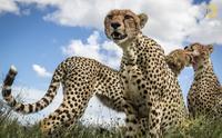 National Geographic представил первые снимки с конкурса Nature Photographer 2017