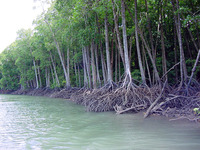 Почему в Тихом океане пропадают острова
