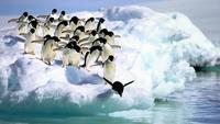 Пингвины: тактика выживания в самом суровом месте планеты