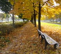 Муринский парк в Санкт-Петербурге в октябре