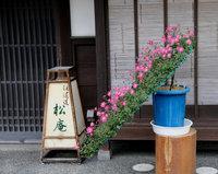 Дары улиц Японии: инструктаж по выбору хурмы