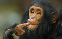 Потрясающие результаты научного эксперимента: на что готовы обезьяны ради денег