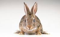 Как Австралия боролась с кроликами, захватившими континент