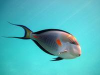 Какие опасности поджидают невнимательных дайверов в коралловых рифах Красного моря
