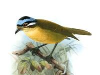 Оказывается, в мире существуют птицы, яд которых может убить человека