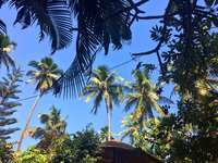 Пальмы-спасительницы, Гоа