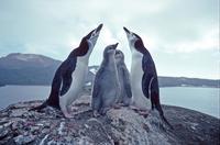 Остров Завадовского: райское место для полутора миллионов «британских подданных»
