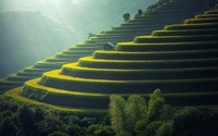 Зачем рисовые поля заливают водой, когда рис прекрасно растет и на обычной почве