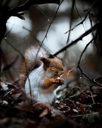 Фотограф снимает лесных животных Финляндии как профессиональных моделей