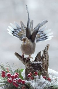 10 великолепных фото птиц и грызунов от фотографа-любителя
