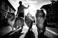 Британский фотограф делает потрясающие портреты собак в разных городах мира