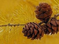 Ни береза, ни сосна: каких деревьев больше всего растет в России, и чем они уникальны