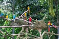 Хайнань — Tropical Bird Park