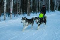 Собачья упряжка в Байкальске