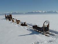Катание на собачьих упряжках, Байкал