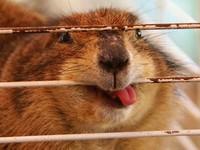 Не все животные бывают фотогеничными