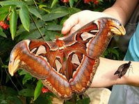 Редкие гиганты: как выглядят 10 самых больших бабочек в мире