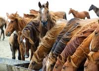Мустанги озера Маныч-Гудило: как лошади оказались одни на необитаемом острове