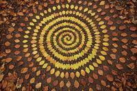 Художник проводит дни, выкладывая природные объекты в магические мандалы