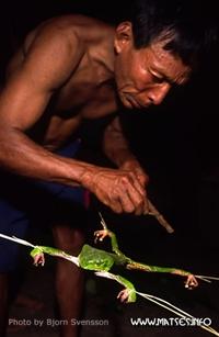 Люди-ягуары и их первозданный мир амазонского леса