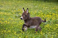 10 очаровательных маленьких осликов, которые сделают ваш день