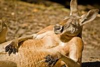 Угадать животное по одной детали — забавный тест для настоящих знатоков дикой природы
