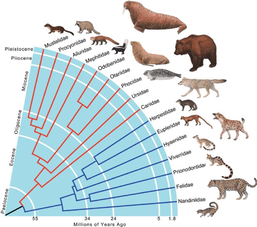 Почему отряд ластоногих упразднили, а тюленей переместили к волкам и медведям