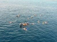 Дайверы в Красном море