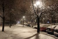 Даже машины засыпаны снегом