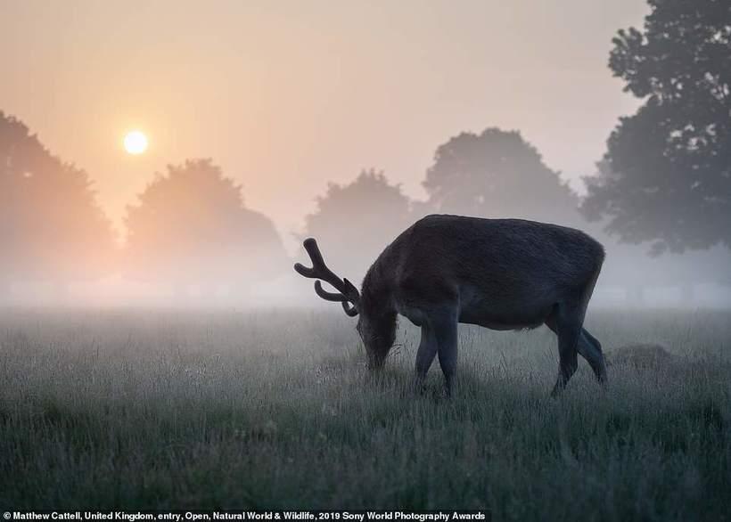 Самые крутые фото, претендующие на победу Sony World Photography Awards 2019