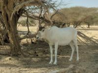 Hai Bar - Wildlife Reserve