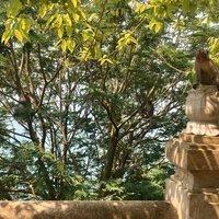 На горе Сон Тра живет много обезьян, июль 2018