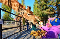 Как снимать жирафа. Лайфхак