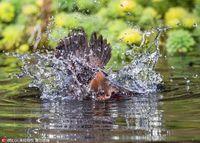 7 забавных и любопытных фото, о том как большой крохаль речных раков ловил
