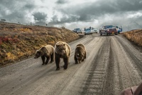 15 лучших снимков National Geographic 2016 года, которые должен увидеть каждый