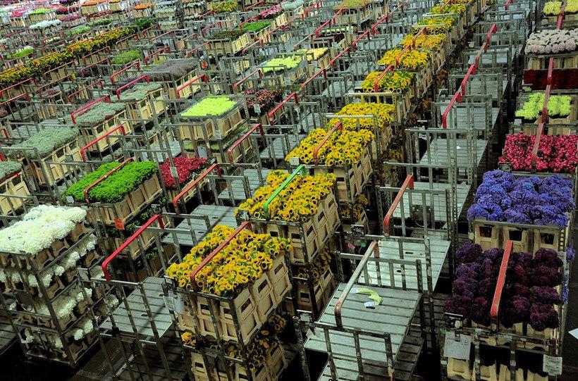 Прямые поставки цветов оптом из китая, цветы