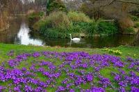 Цветы в парке Лондона, март