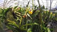 Ферма орхидей, Пхукет