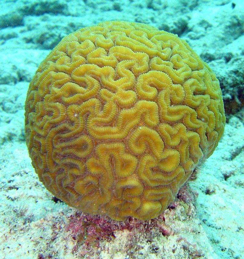 Кораллы — это животные или растения?