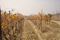 Виноградники Пьемонта