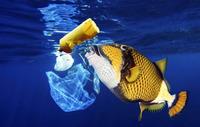 16 фото, которые будут стоять у вас перед глазами каждый раз, когда вы выносите мусор