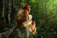 Шедевры: названы победители конкурса фотографии дикой природы 2018 года