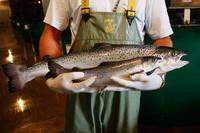 Генетически модифицированный лосось скоро появится в Канаде и США